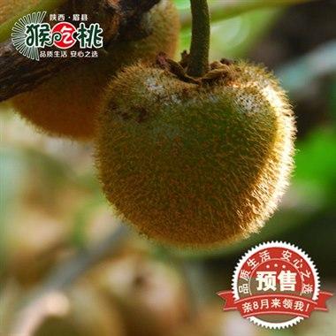 陕西眉县酵素奇异果 有机绿心猕猴桃 20枚/箱